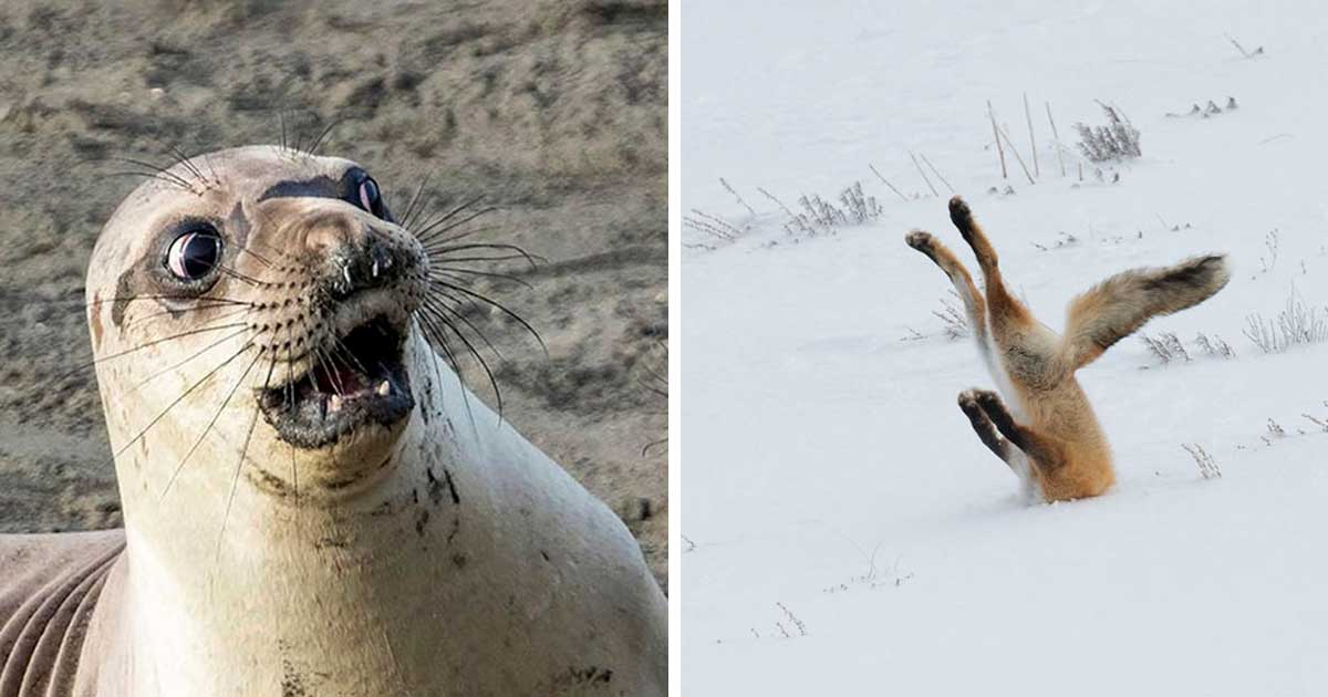 hilarious_wildlife_photography_featured
