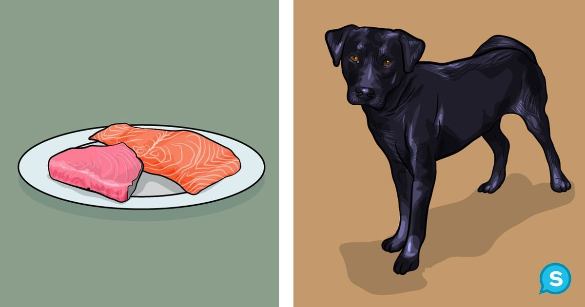 Can You Feed Your Dog Fish Oil