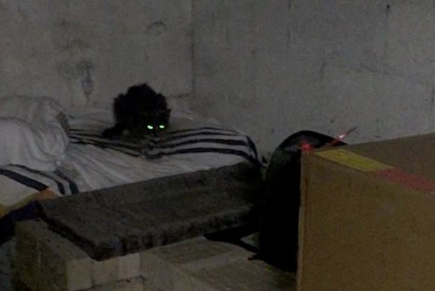 cat spends 20 years in basement after getting abandoned