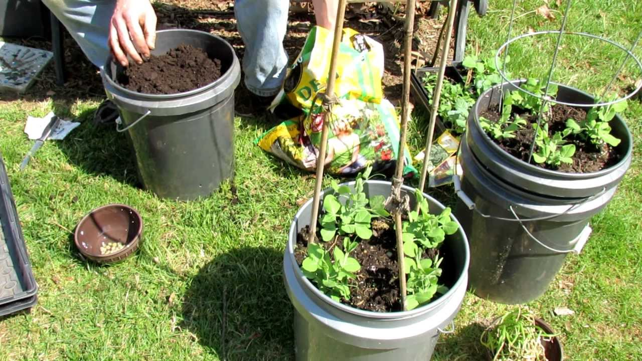how to grow watermelon step by step