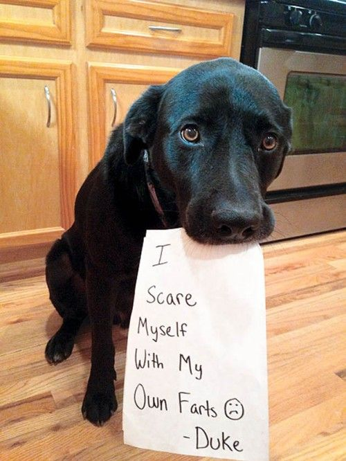 Hilarious Times Dogs Were Caught Red Handed And Couldnt Hide - 26 funny photos of guilty dogs
