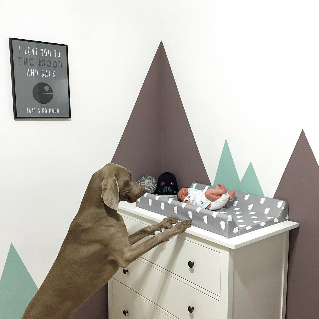 How Do Dogs React To Being Watched