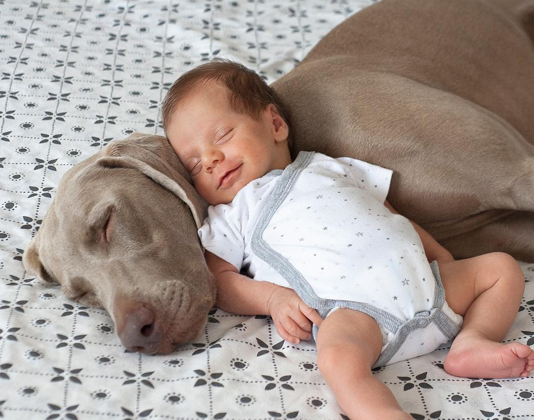 Image result for Dog Patiently Waits 9 Months For Baby Brother