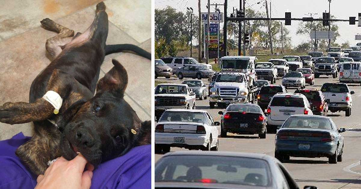 Puppy Is Left On Highway With Muzzle Taped Shut Makes