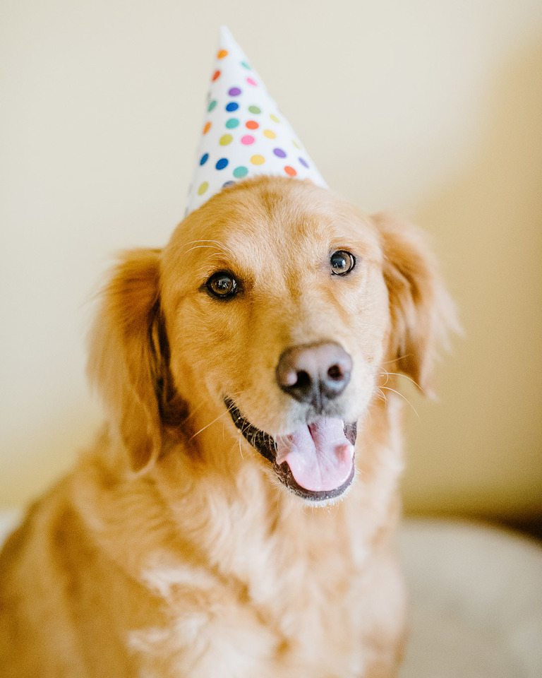 Never Adopt A Golden Retriever Here Are 15 Reasons Why