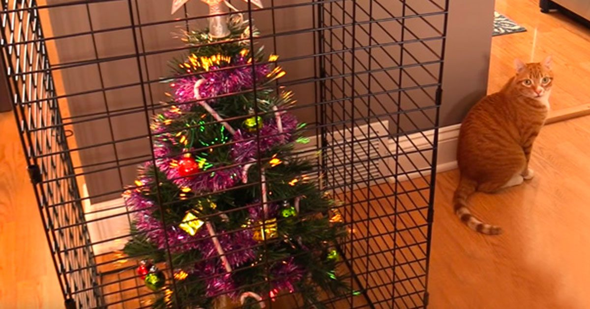 How To Cat Proof Your Christmas Tree.10 Hilarious Times Humans Had To Protect Their Christmas