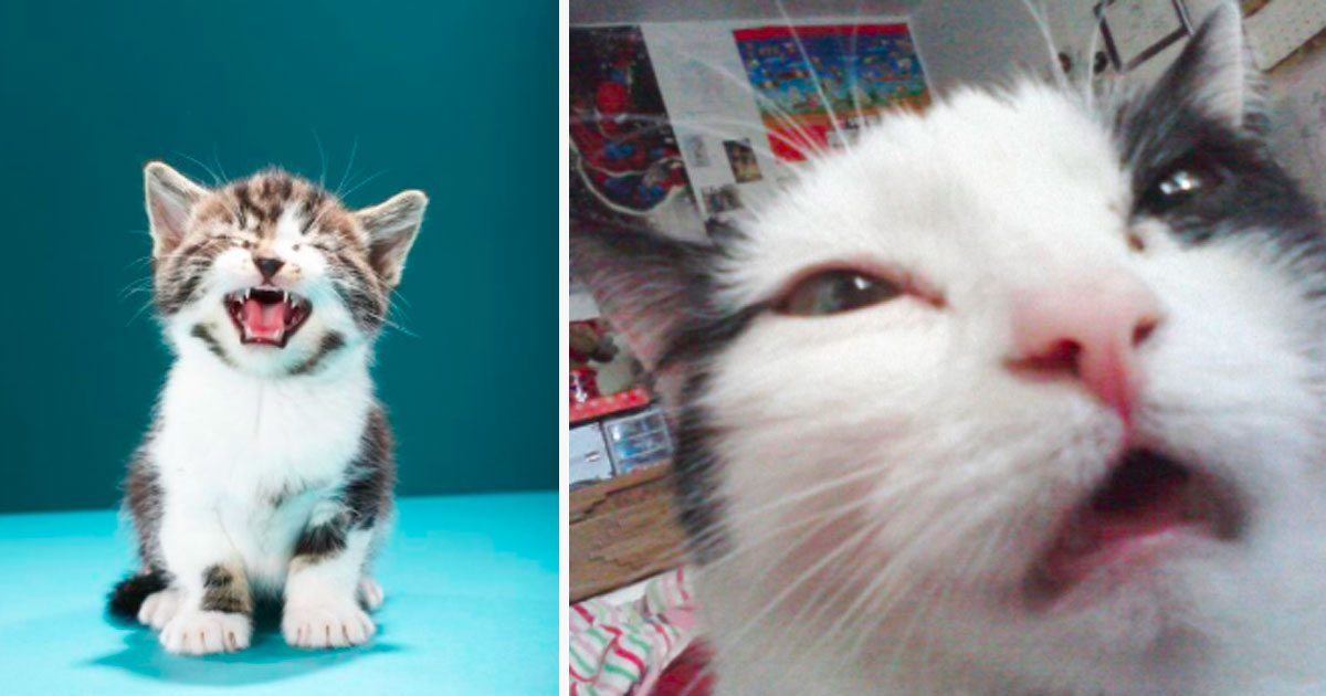 Hilarious Faces That Cats Made Right Before They Were About To - Hilarious photographs faces pulled sneezing dogs cats