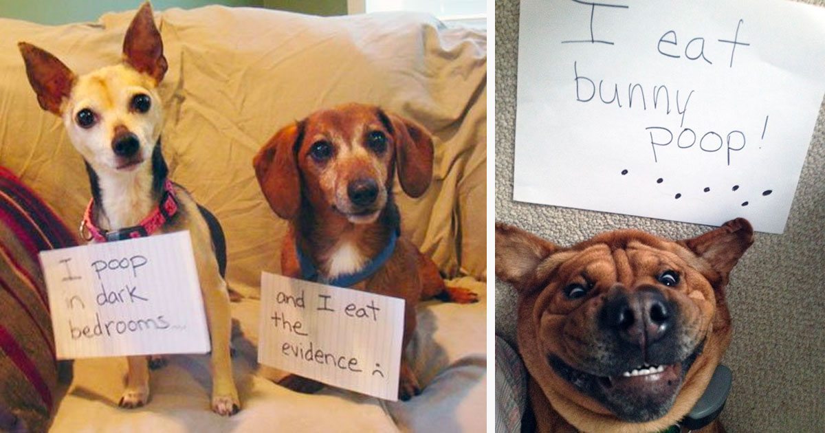 10 Times People Shamed Their Mischievous Dogs And They