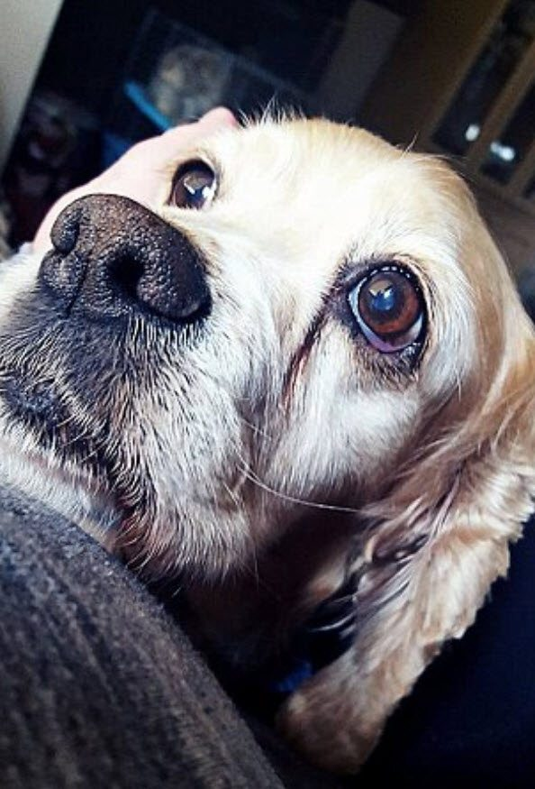 Senior Dog Cries As Family Leaves Her Behind At Shelter For - Animal abusers will finally registered just like happens sex offenders