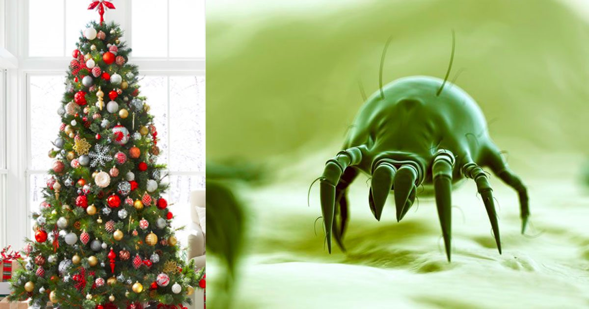 Bugs In Christmas Trees.Make Sure To Take Your Christmas Tree Down Quick It S