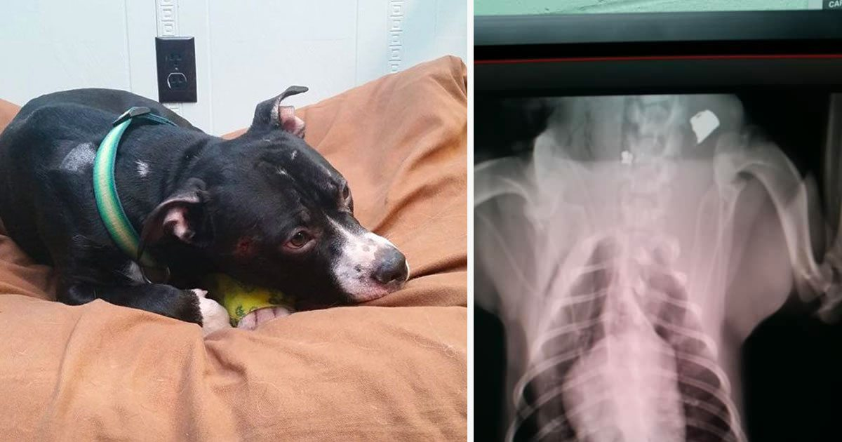 Dog Makes Miraculous Recovery After Getting Shot