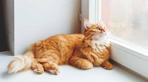 people are saying essential oils are toxic to cats now aspca fires back. Black Bedroom Furniture Sets. Home Design Ideas