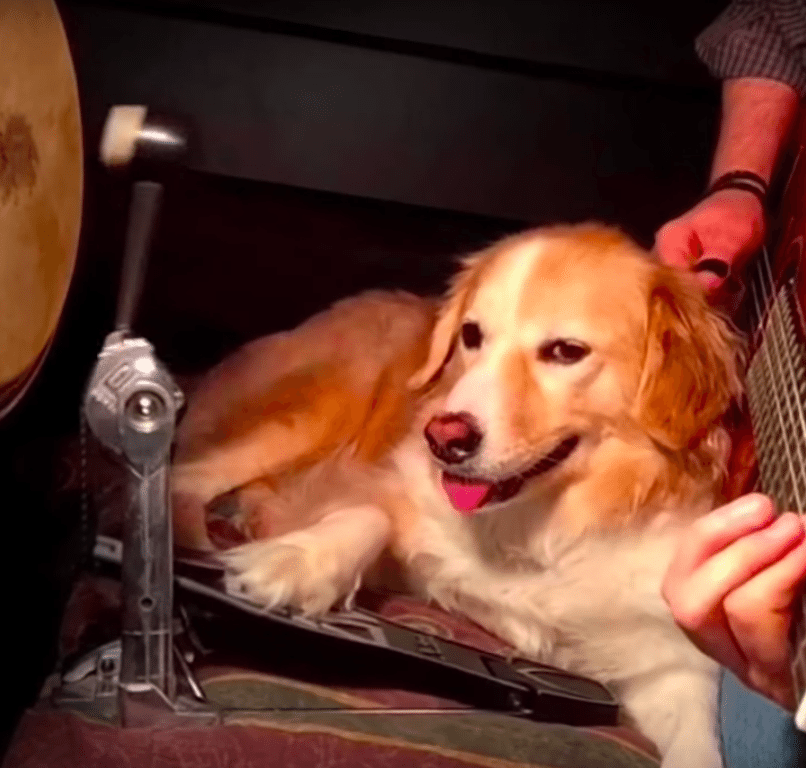 Man And Dog Play Classic Songs On Video