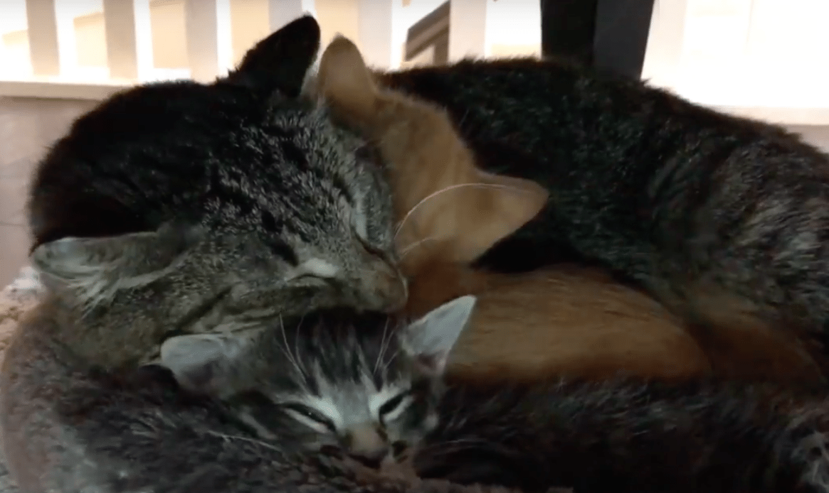 Feral Cat Rescue Los Angeles