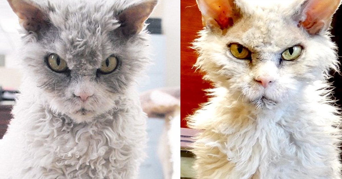 Sinister Cat With Permanent Scowl Becomes Instant Celebrity