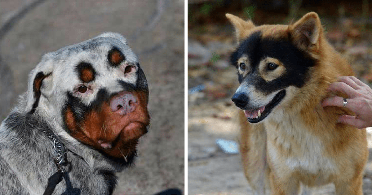 30 Dogs With The Craziest Fur Markings You've Ever Seen