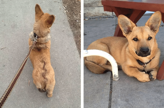 Here Are 20 Of The Most Adorable German Shepherd Mixes