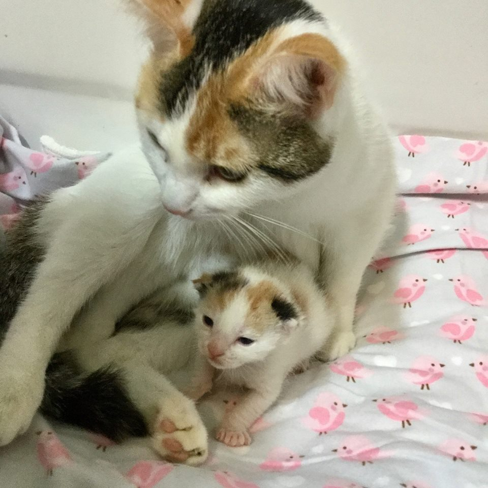 Cat Rescued From Shelter Won't Stop Hugging Her Kitten