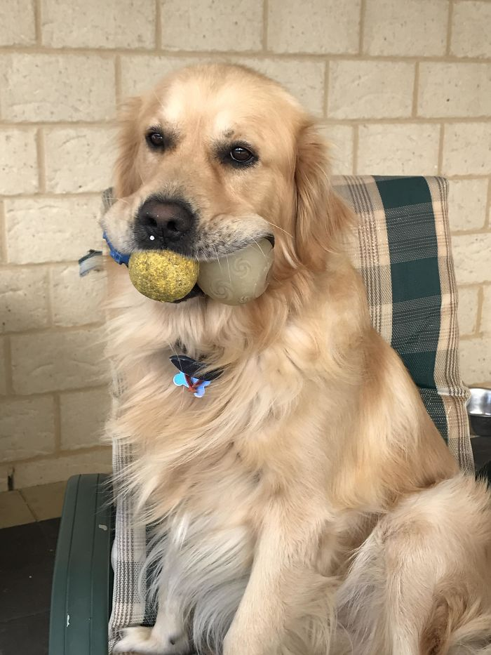 20 Photos That Prove Retrievers Are The Best Dogs
