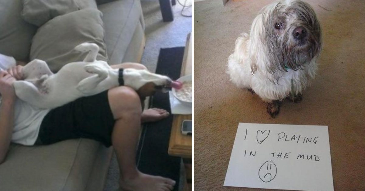 10+ Hilarious Photos That Only Dog Owners Can Relate To