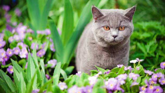 Keep Cats From Chewing Plants
