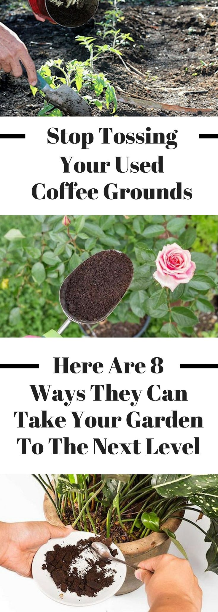8 ways to use coffee grounds in your garden Coffee grounds for garden