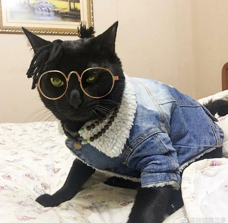 costumed cat