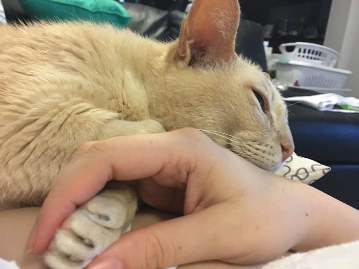 cat-holding-hands