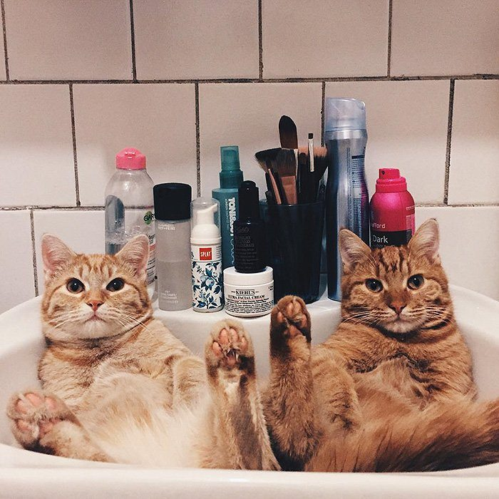 ginger-cats-sink