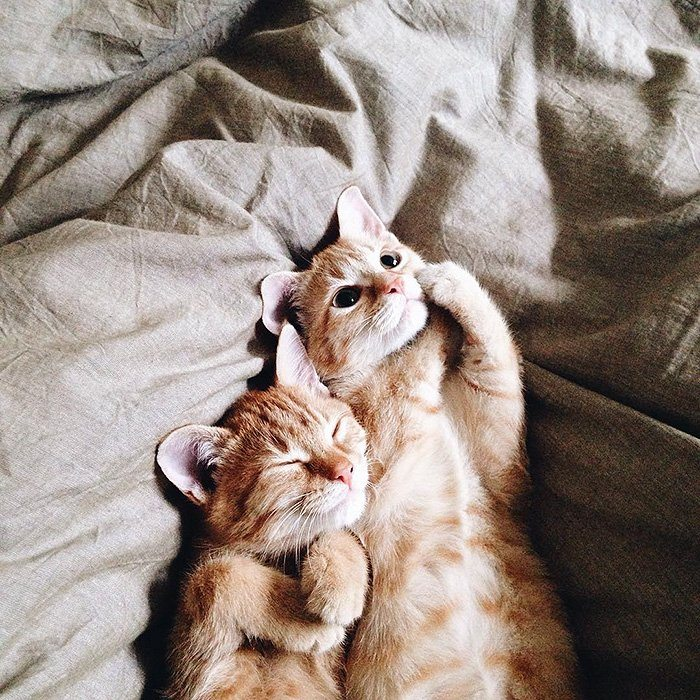 ginger-cats-bed