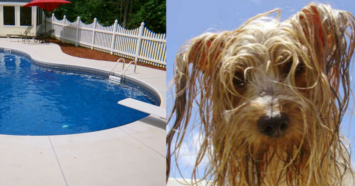 Dog Falls Into Pool And Starts to Drown, Then Cameras Capture His Unexpected Rescuer