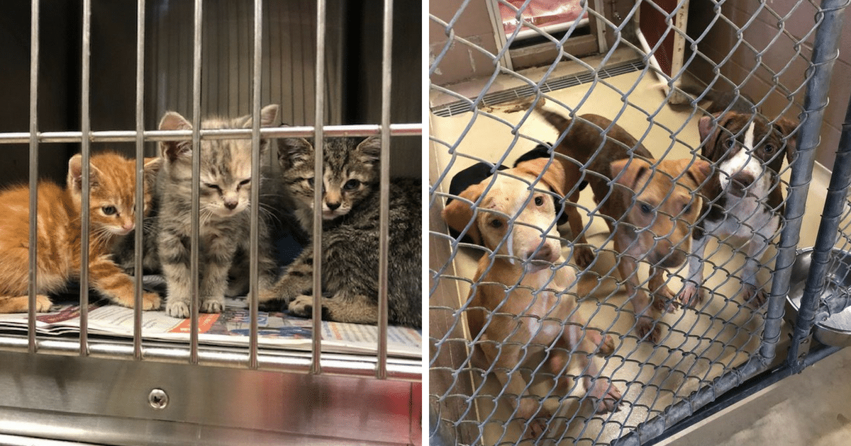 More Than 300 Pets Surrendered Over Memorial Day Weekend