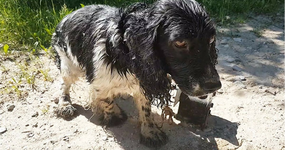 dog-who-survived-drowning-attempt-rescued-by-stranger