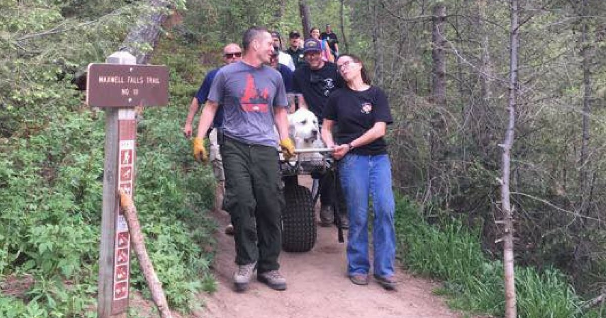 dog-needs-to-be-rescued-during-hike