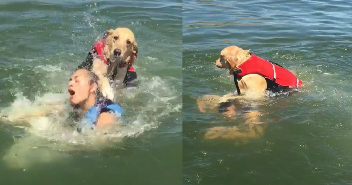 Image result for Dog Is Mocked After Almost Accidentally Drowning His Human