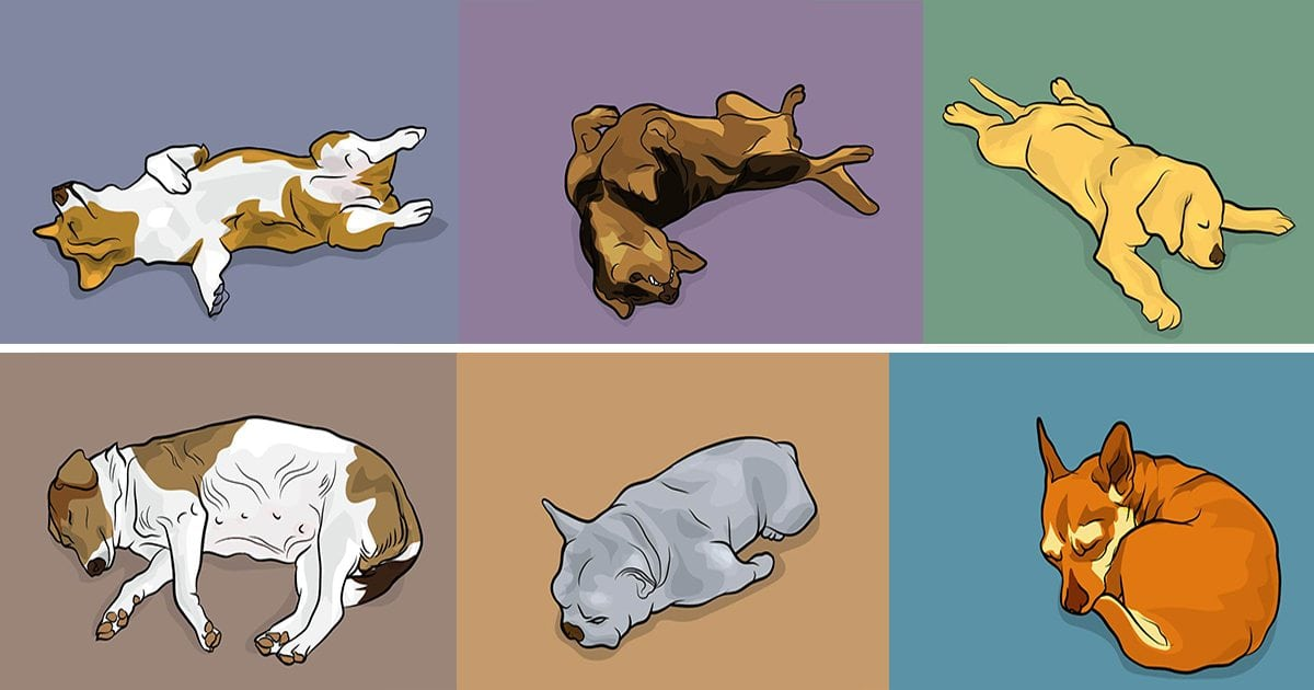 Your Dog's Sleeping Position Tells You A Lot. Here Are 50+ Dog Behaviors And What They Mean