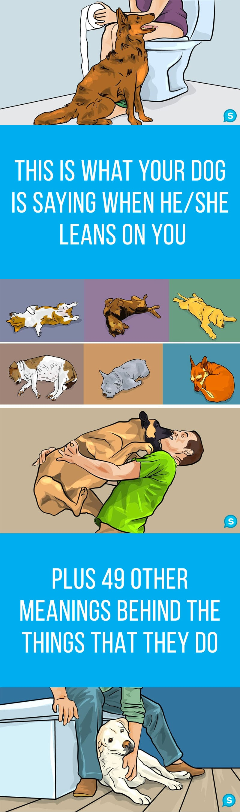 50 Diffe Dog Behaviors Sleeping Positions And Faces