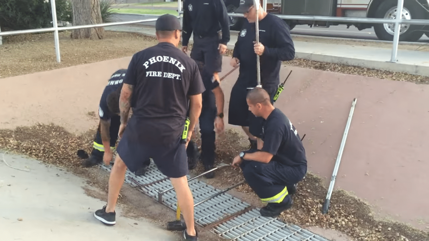 ducks-rescued-sewer-grate-phoenix