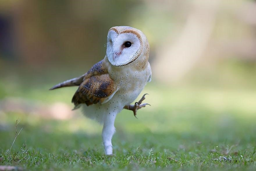 happy owl