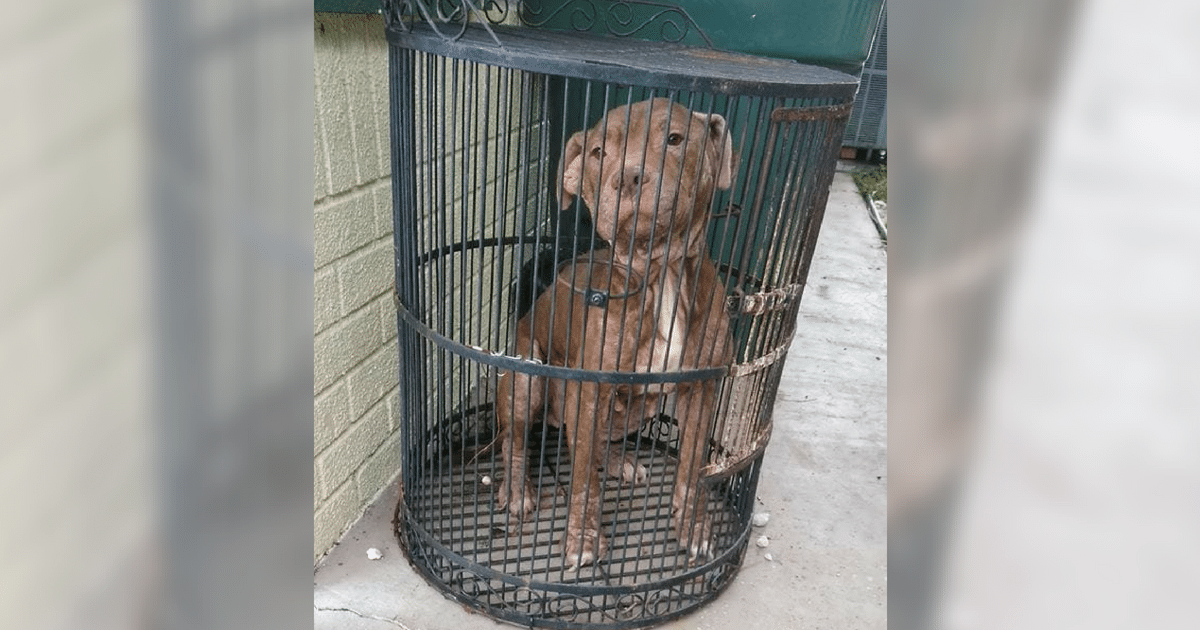 Scared Dog Abandoned In A Bird Cage At Shelter