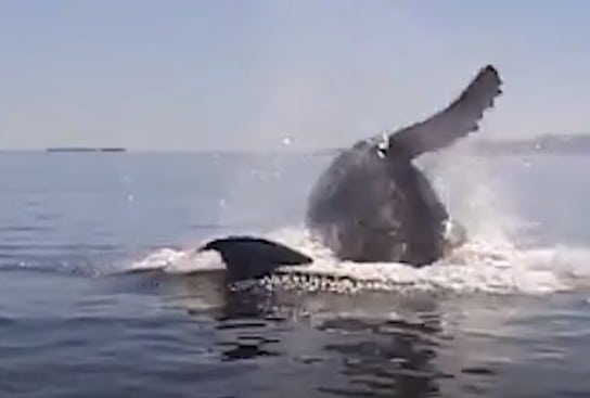 freed whale