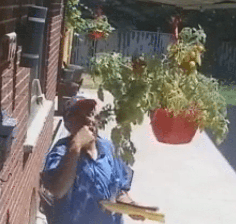 mailman-steals-tomatoes