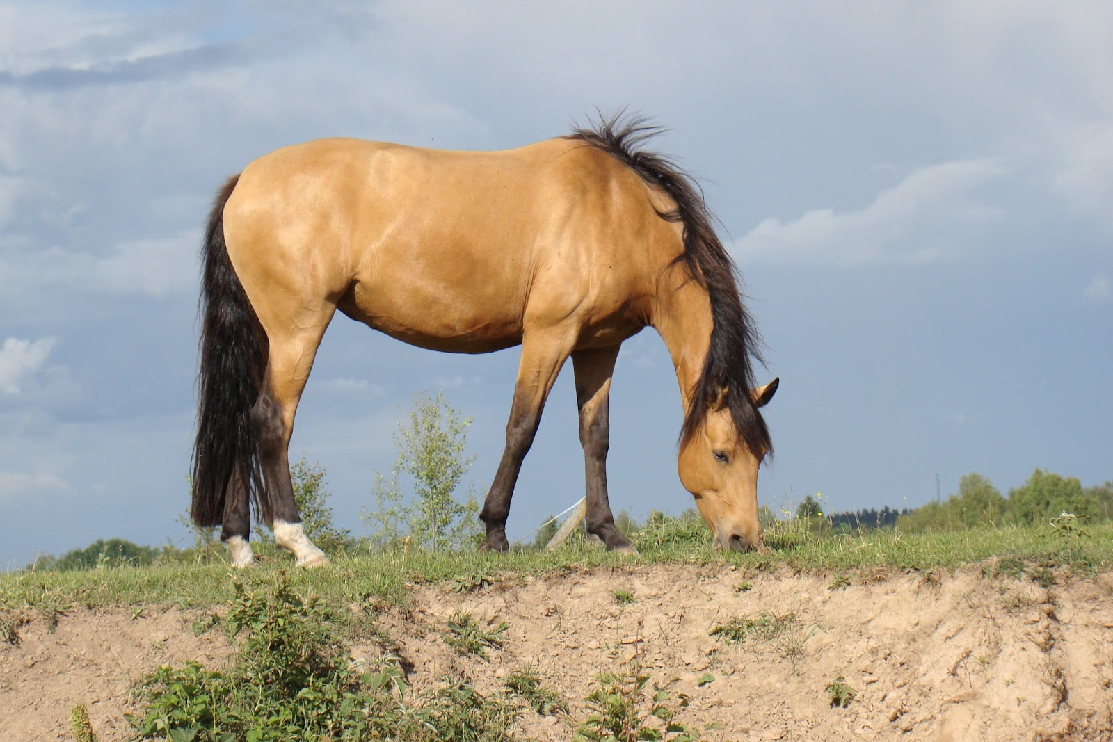 35 Horses With The Most Beautiful And Unique Colors In The World