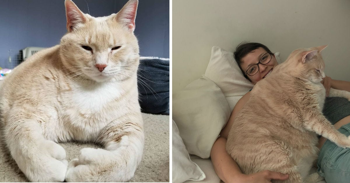 Couple Adopts 33 Pound Cat And Helps Him Lose Weight