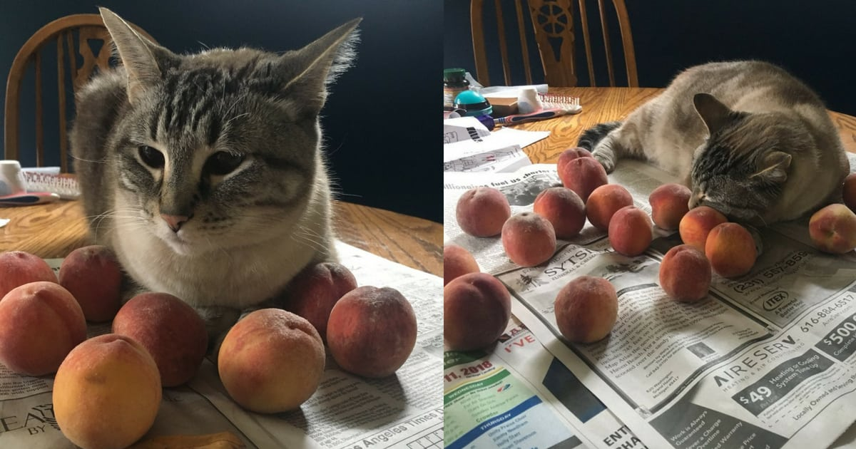 ozzy-the-cat-loves-to-cuddle-with-peaches