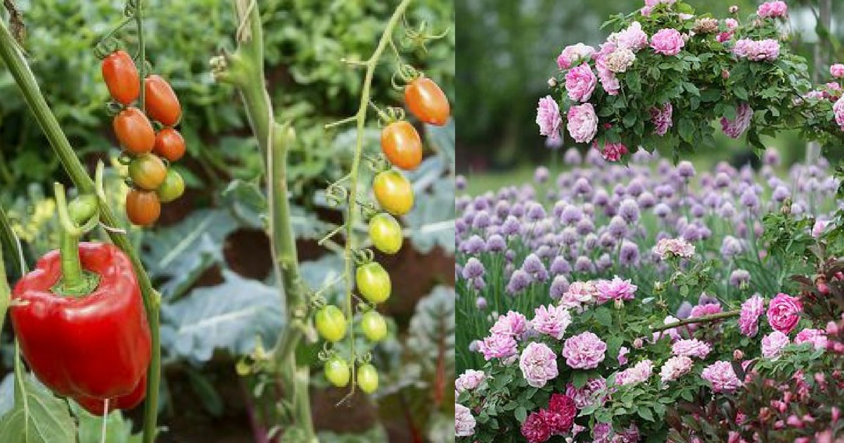 10-plant-combinations-you-should-grow-together