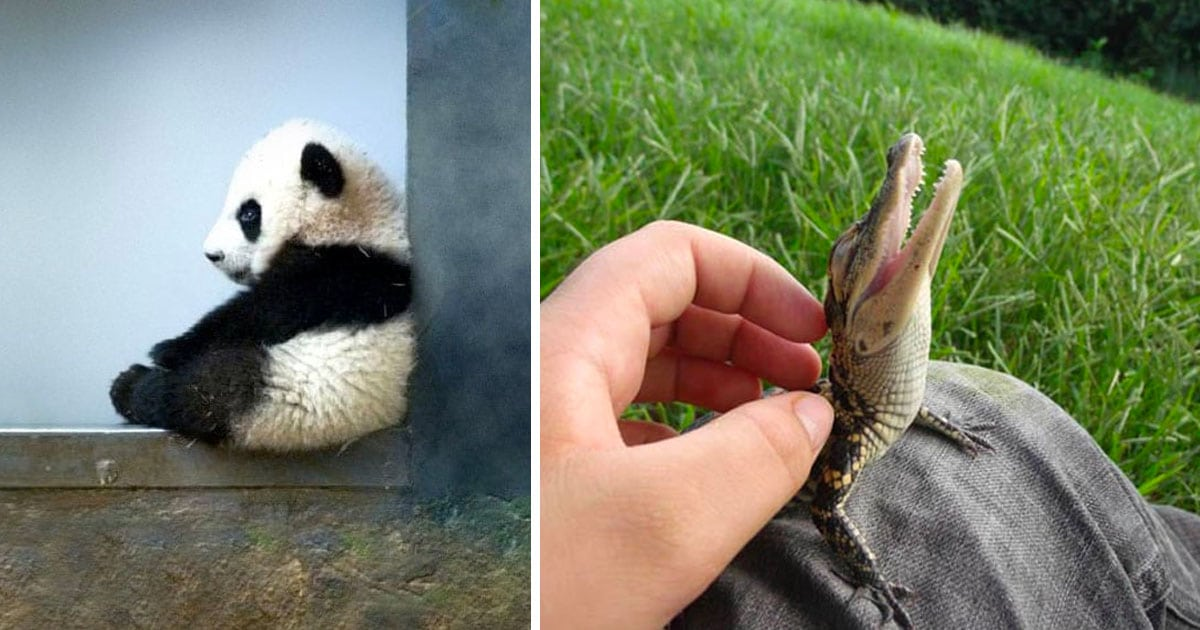 35 Adorable Baby Animals That Shouldn T Be Allowed To Be This Cute