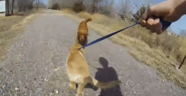 dog-reunites-with-mother-video