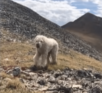 dog-lost-colorado-mountains-samantha-orr