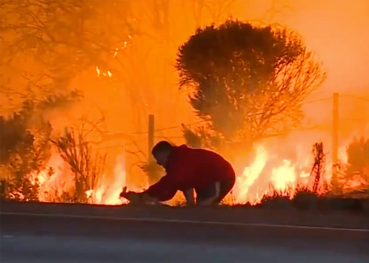 man-rescues-bunny-wildfire